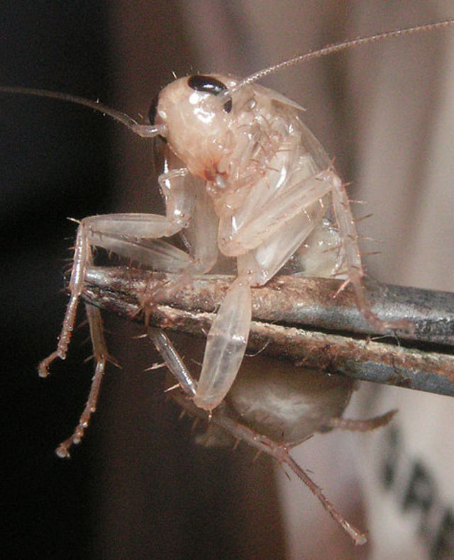 The Caribbean Insect Dictionary | Wiwords com